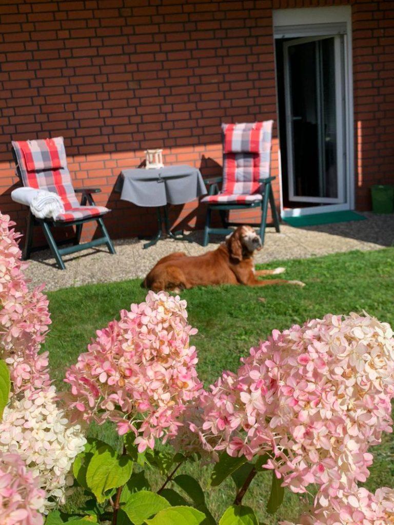 terrasse fewo braunlage helga klein