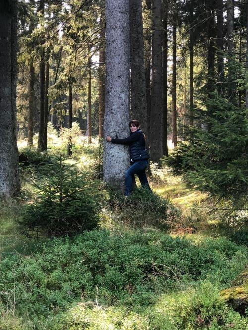 bäume umarmen im harz